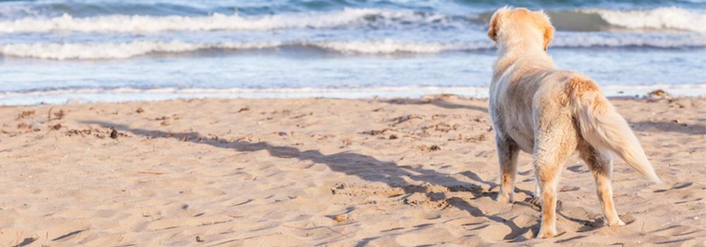 Pet Friendly Vacation Rentals | Corolla Classic Vacation Rentals